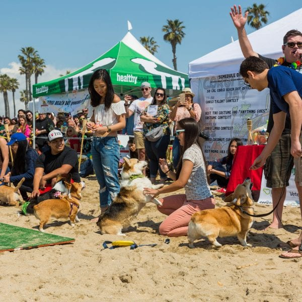 , So Cal Corgi Beach Day Spring 2017, Vetericyn Animal Wellness
