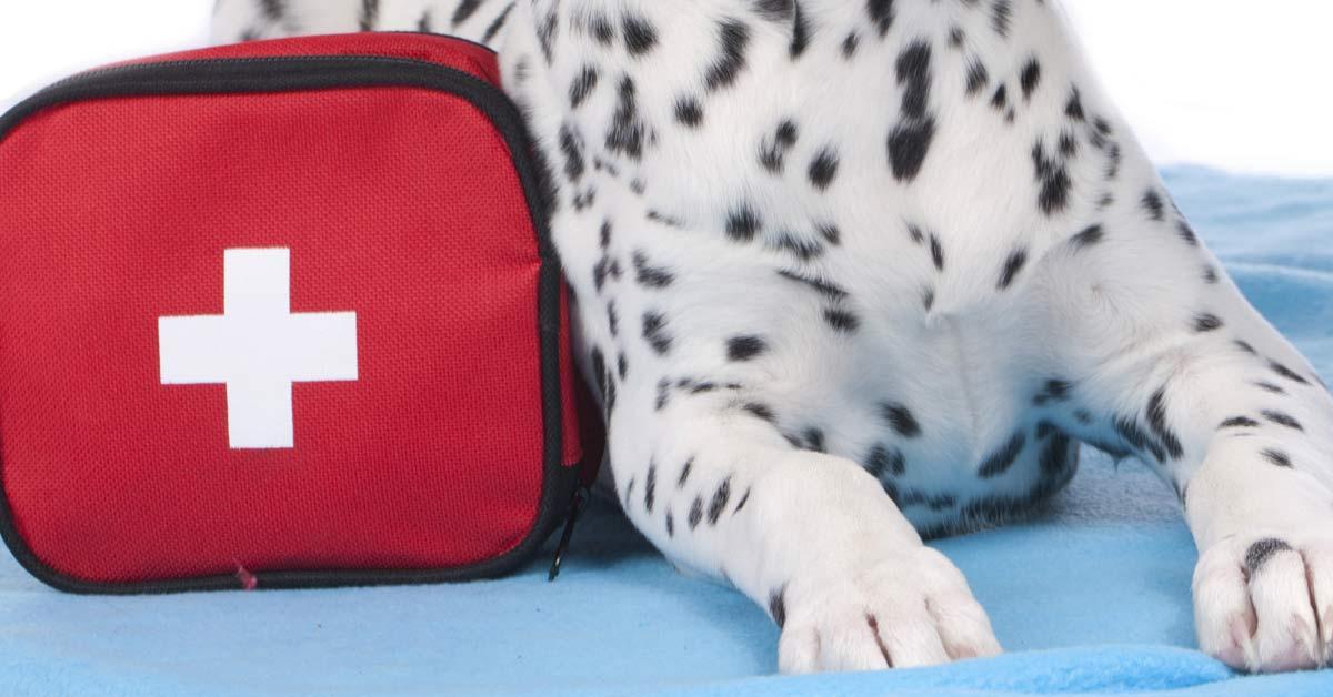 pet first aid kit, Pet First Aid Kit Essentials, Vetericyn Animal Wellness