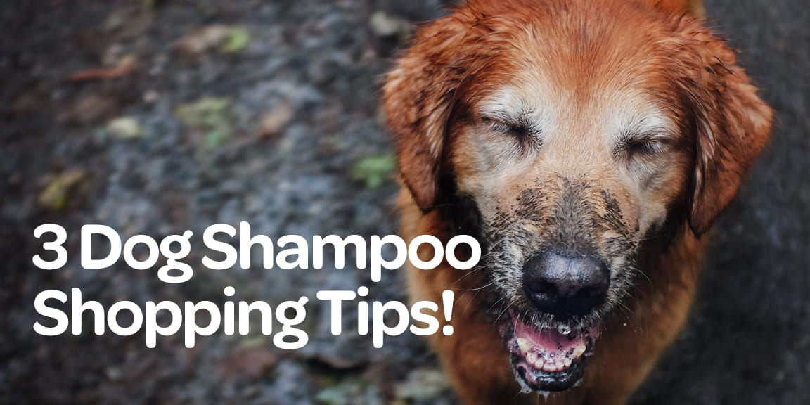 dog shampoo, 3 Dog Shampoo Shopping Tips, Vetericyn Animal Wellness