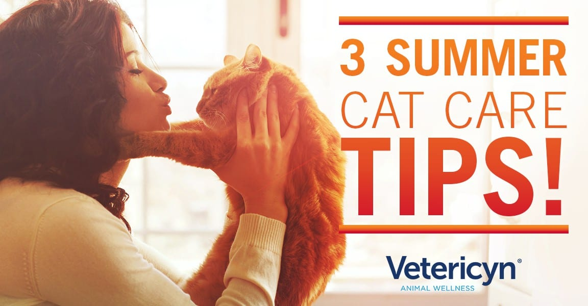 cat, 3 Summer Cat Care Tips, Vetericyn Animal Wellness