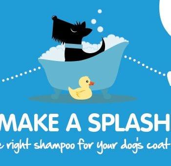 labrador, What Is the Best Pet Shampoo for Labrador Retrievers?, Vetericyn Animal Wellness