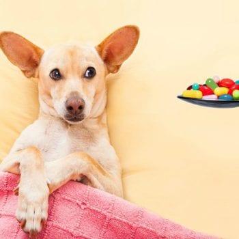 huskies, What is the Best Pet Shampoo for Huskies?, Vetericyn Animal Wellness