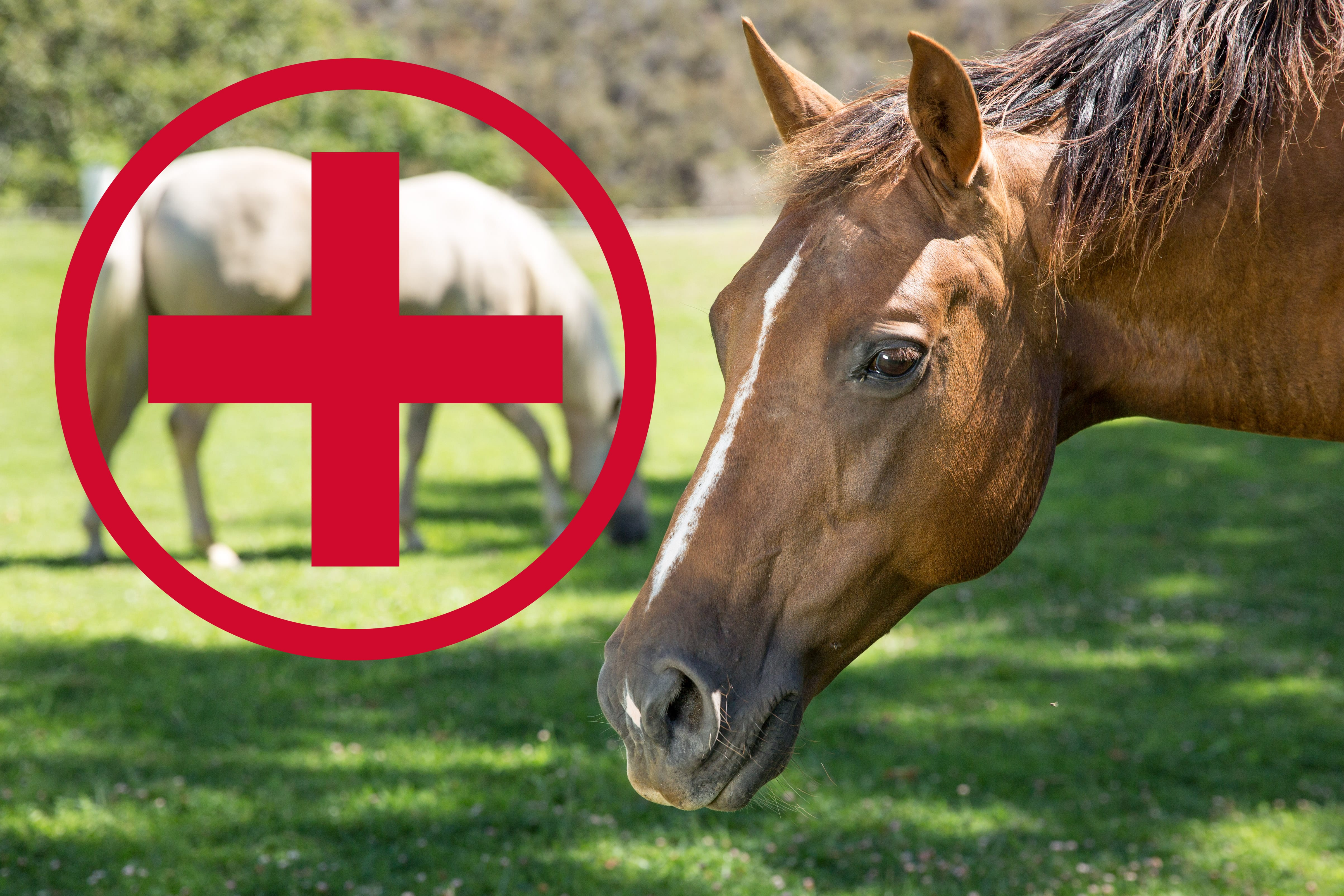 what to keep in your equine first aid kit