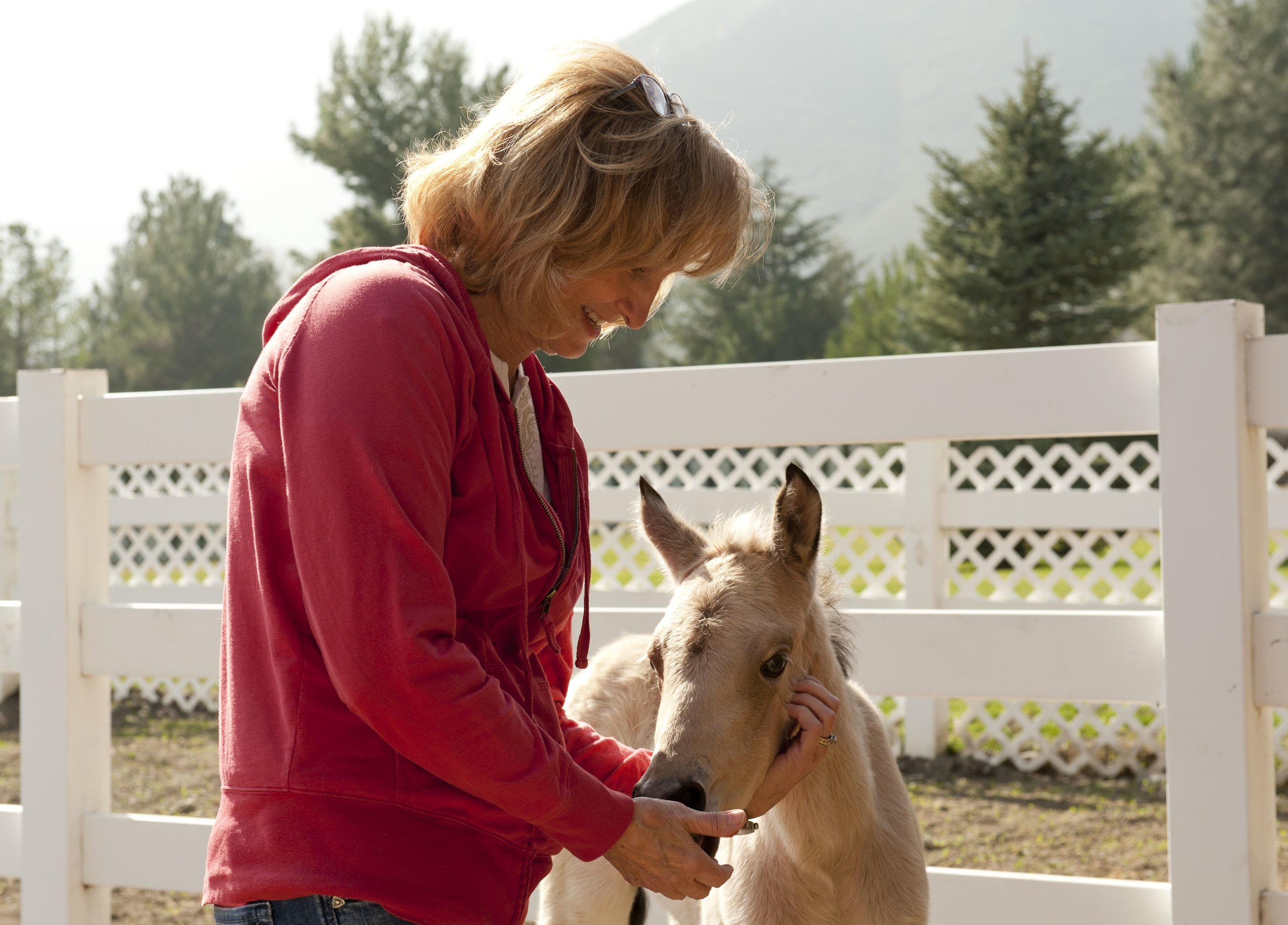 first aid, What to Put in Your Equine First Aid Kit, Vetericyn Animal Wellness