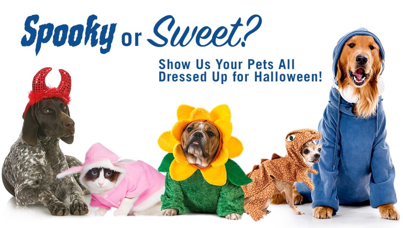 , Halloween, Vetericyn Animal Wellness