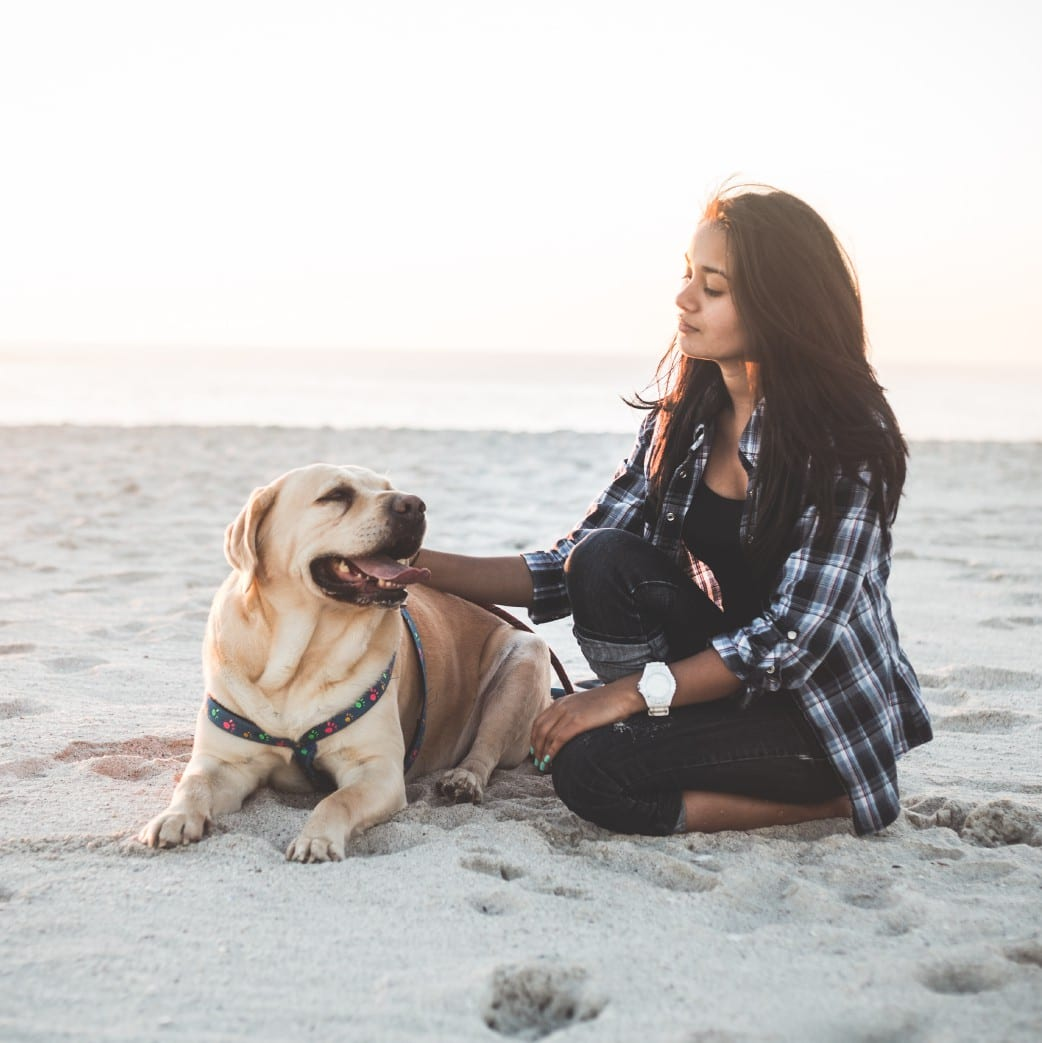 Valentine's, 10 Valentine's Date Ideas for You and Your Dog, Vetericyn Animal Wellness