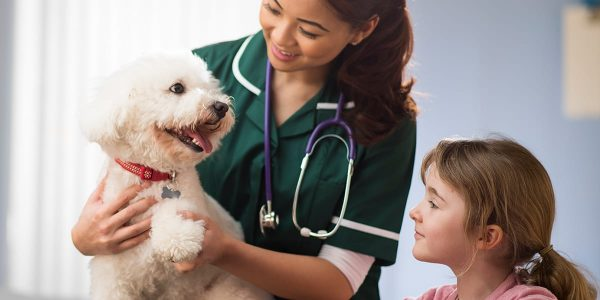 spayed, What You Should Do Before and After Your Pet Is Spayed or Neutered, Vetericyn Animal Wellness