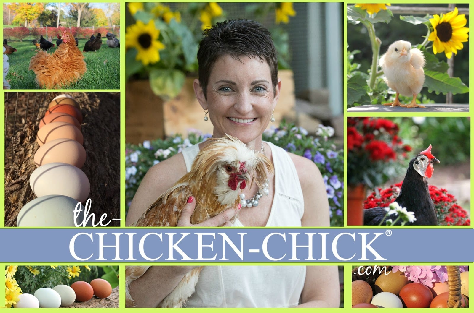 chicken, Backyard Chicken Wound Care Readiness by Kathy Shea Mormino, The Chicken Chick®, Vetericyn Animal Wellness