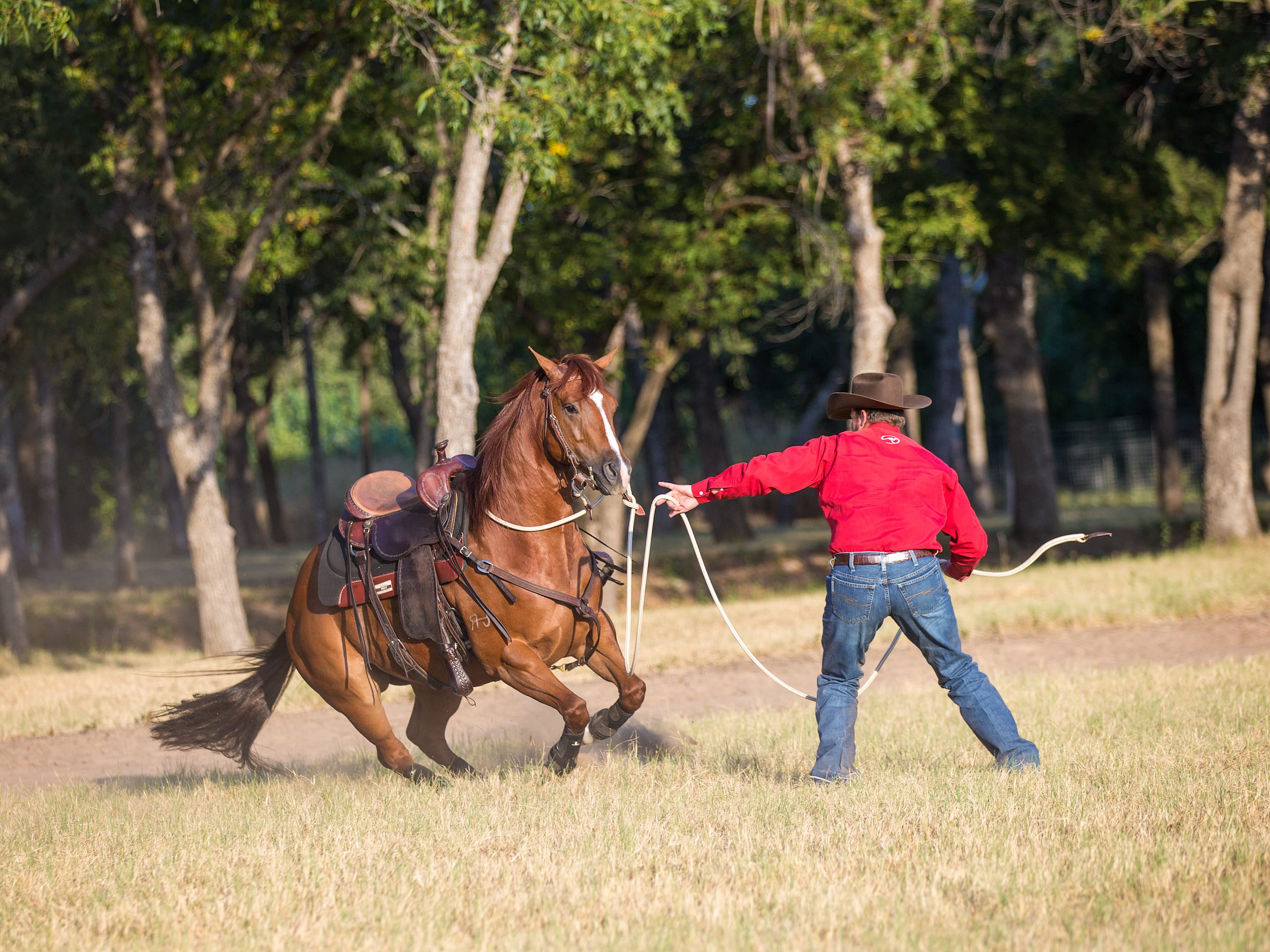 , Clinton Anderson Tip – 3 Ways to Overcome Your Horse's Rearing, Vetericyn Animal Wellness, Vetericyn Animal Wellness