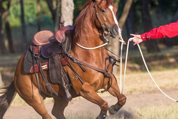 horse, Get Your Horse Ready for Spring With These 8 Tips, Vetericyn Animal Wellness