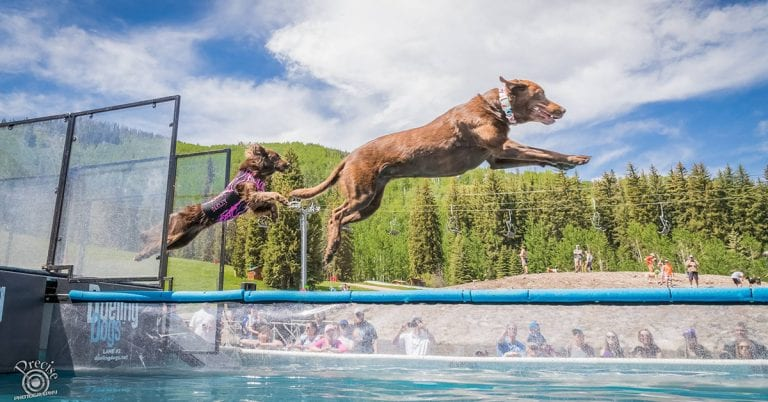 , Meet the Labrador Retrievers Flying High in Canine Aquatic Sports!, Vetericyn Animal Wellness, Vetericyn Animal Wellness