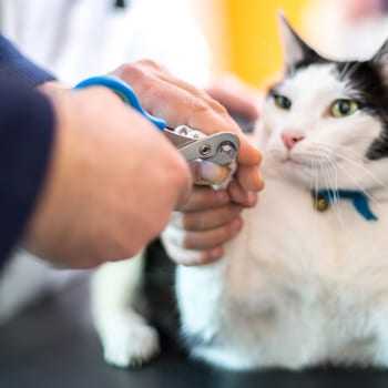 Adopt a pet, Adopting a Pet? What To Know About Wellness, Vetericyn Animal Wellness