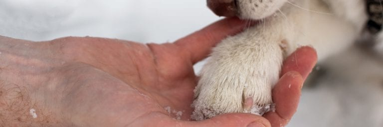pet eye and ear care, Proper Paw Care: How to Treat and Prevent Cracked Dog Paws, Vetericyn Animal Wellness