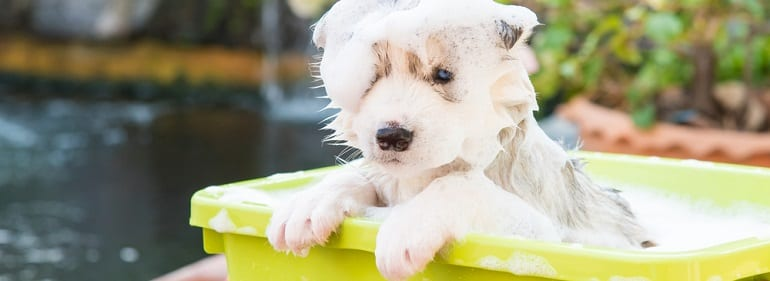 , 11 Tips for Dog Bathing at Home, Vetericyn Animal Wellness