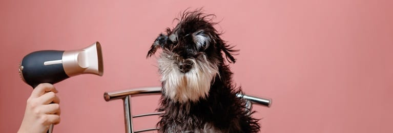 , How to Groom Long-Haired Dogs, Vetericyn Animal Wellness