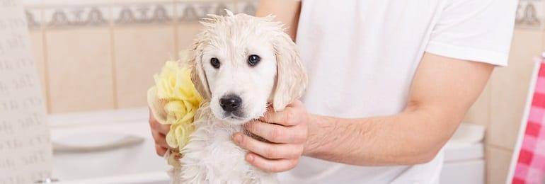 , How Often Should I Wash My Dog?, Vetericyn Animal Wellness