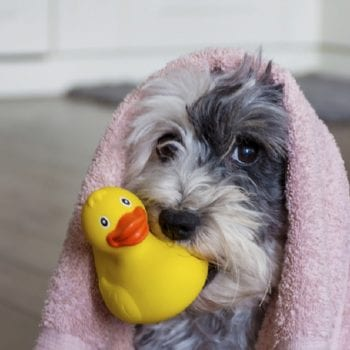 , 5 Tips for Keeping Your Pup in the Bathtub During Bath Time, Vetericyn Animal Wellness