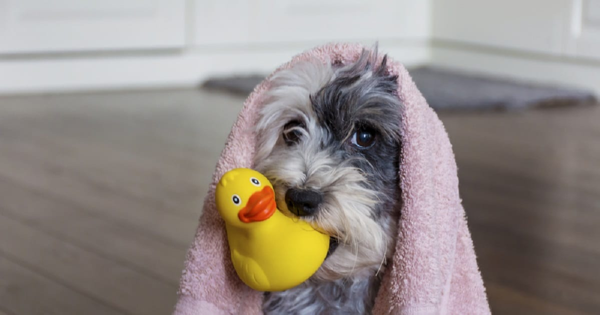 5 Tips For Keeping Your Pup In The Bathtub During Bath Time Vetericyn