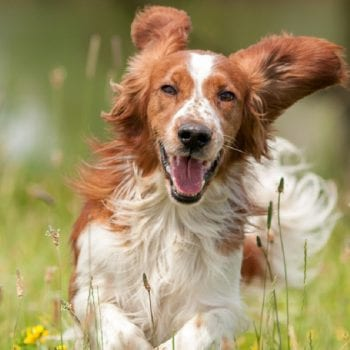 , How to Choose a Supplement That's Just Right for Your Dog, Vetericyn Animal Wellness