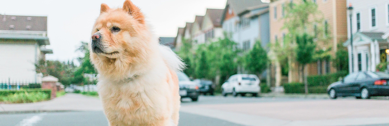 , The Senior Stage: Nutritional Needs for Senior Dogs, Vetericyn Animal Wellness