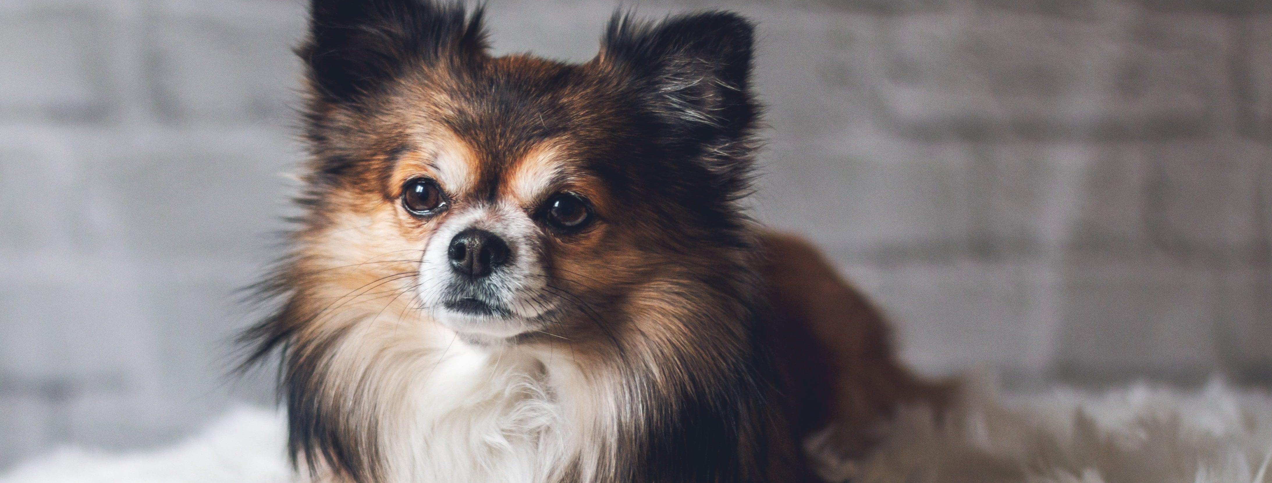 , The Dog Digestive System, Vetericyn Animal Wellness