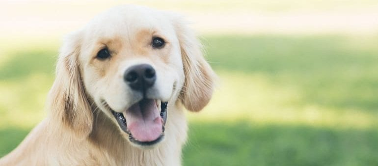 Signs And Symptoms Of Dog Skin Allergies Vetericyn