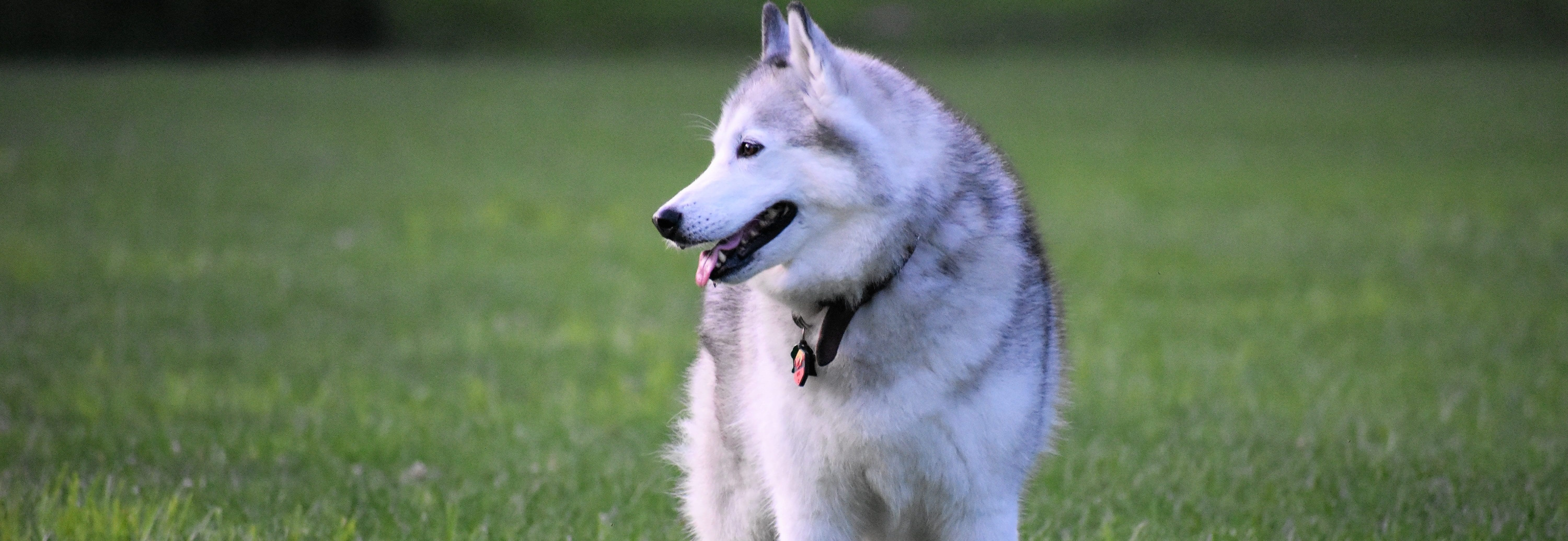 , The Adult Stage: Nutritional Needs for Adult Dogs, Vetericyn Animal Wellness