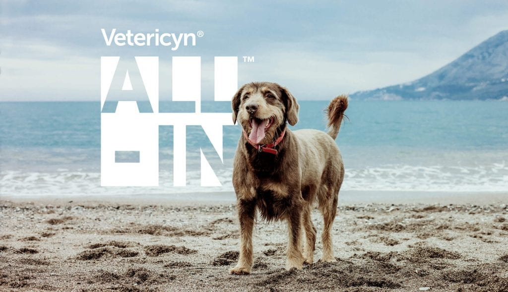 , Vetericyn ALL-IN™ Save 25%, Vetericyn Animal Wellness