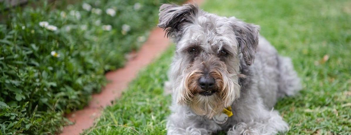 , 7 Benefits of Your Dog Taking a Dietary Supplement, Vetericyn Animal Wellness, Vetericyn Animal Wellness