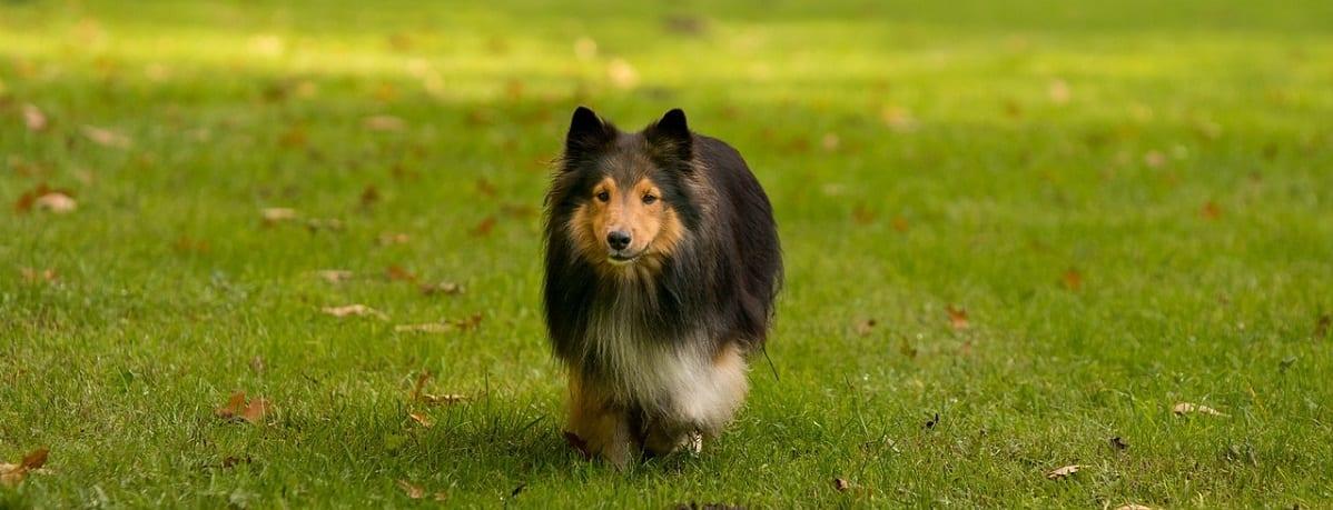, Dog Arthritis Symptoms, Vetericyn Animal Wellness, Vetericyn Animal Wellness