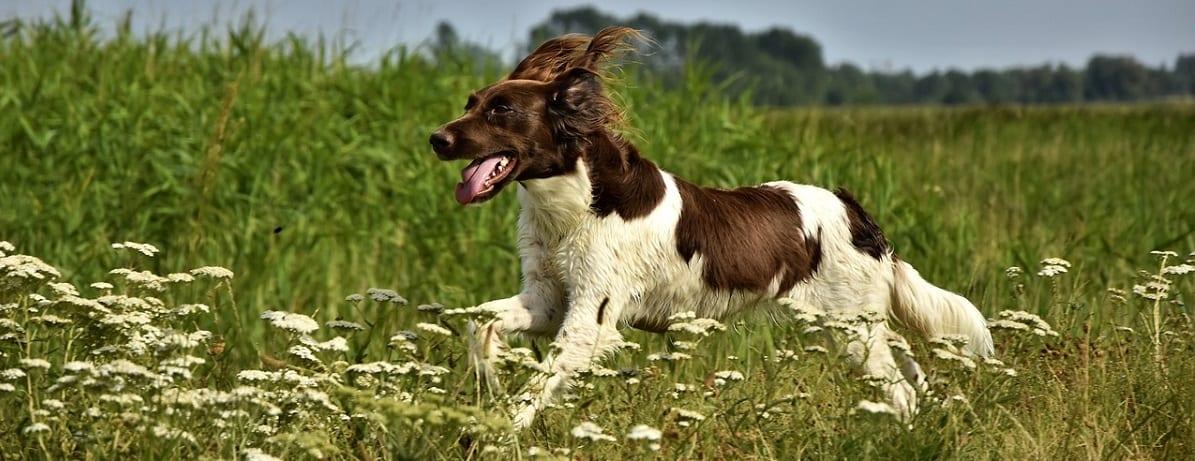 , Dog Arthritis Symptoms, Vetericyn Animal Wellness