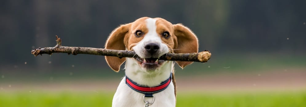 , What Active Dogs Need to Stay Healthy, Vetericyn Animal Wellness