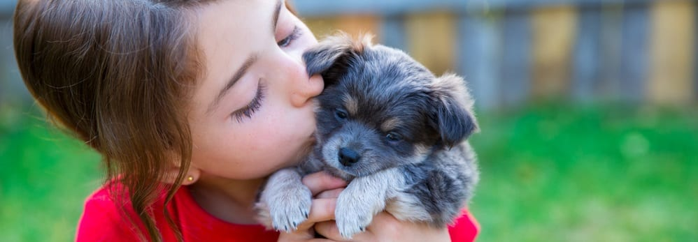 , What Puppies Need to Grow Healthy, Vetericyn Animal Wellness, Vetericyn Animal Wellness