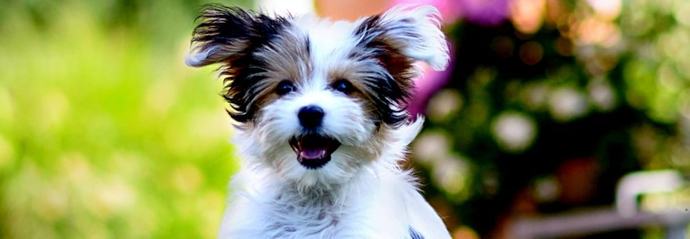 , Why Too Much Supplementation Can Be Toxic to Your Dog, Vetericyn Animal Wellness, Vetericyn Animal Wellness