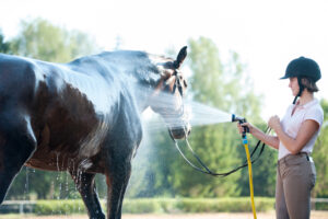 Young teenage girl equestrian washing her favorite brown horse in shower