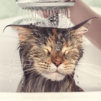 Funny cat enjoying shower