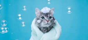 Lovely kitten after bath wrapped in towel with soap foam on his head on blue background