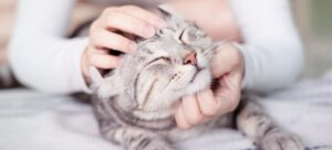 happy cat lovely comfortable sleeping by the woman stroking hand grip at