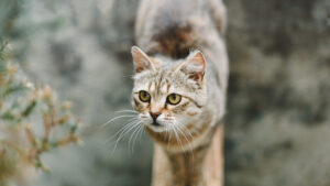 A pretty cute cat with yellow eyes stands and looks to the side