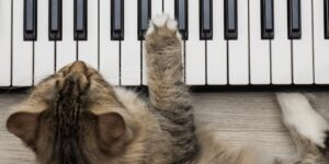 Siberian Forest Cat holding paw on the synthesizer