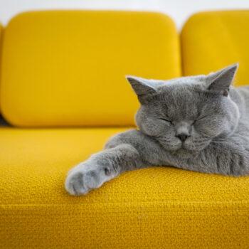 Cat sleeping on a mustard yellow sofa