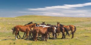 Herd of horses with foals on the vastness of the veldt against the background of a blue sky with clouds on a sunny day